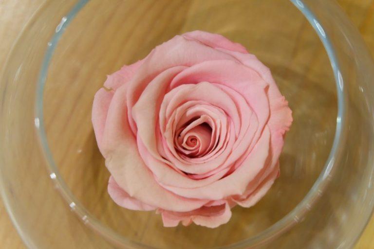 Cosa sono le rose stabilizzate?