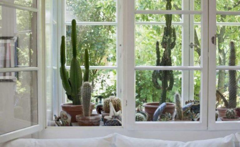 Come arredare casa con le piante