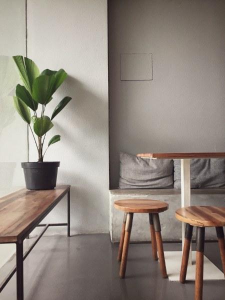 Purificare l'aria in casa con una pianta