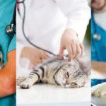 Prenotazione online visita veterinaria, eccome come fare