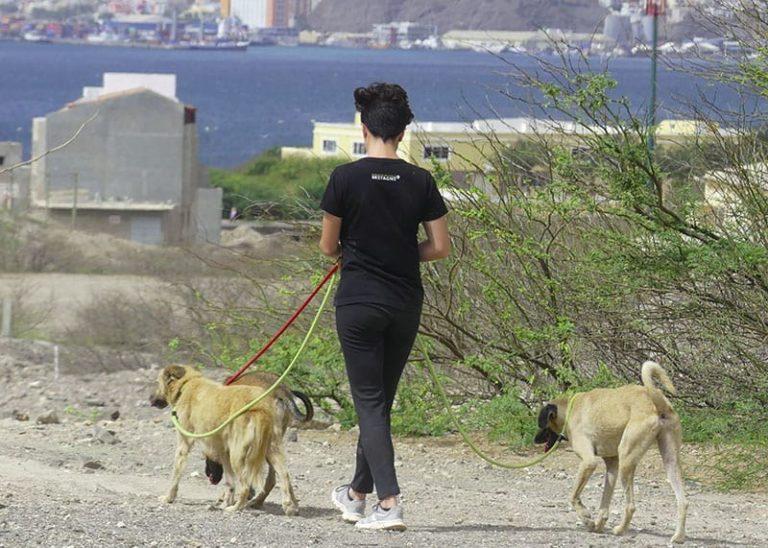 Volontariato con animali come fare per partecipare