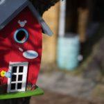 casetta per uccelli