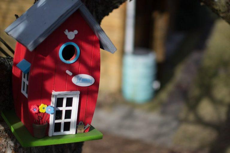 Vuoi mettere in giardino le casette per uccelli? Ecco dove posizionarle