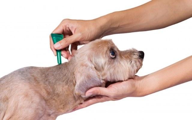 Cani e gatti: quali sono gli antiparassitari da scegliere?